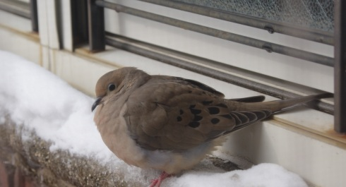 The scene outside my window today. Poor little guy needs a space heater.